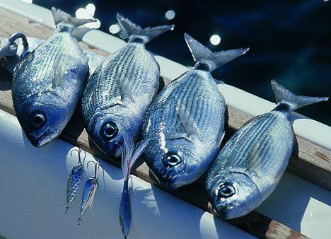 pesca-traina
