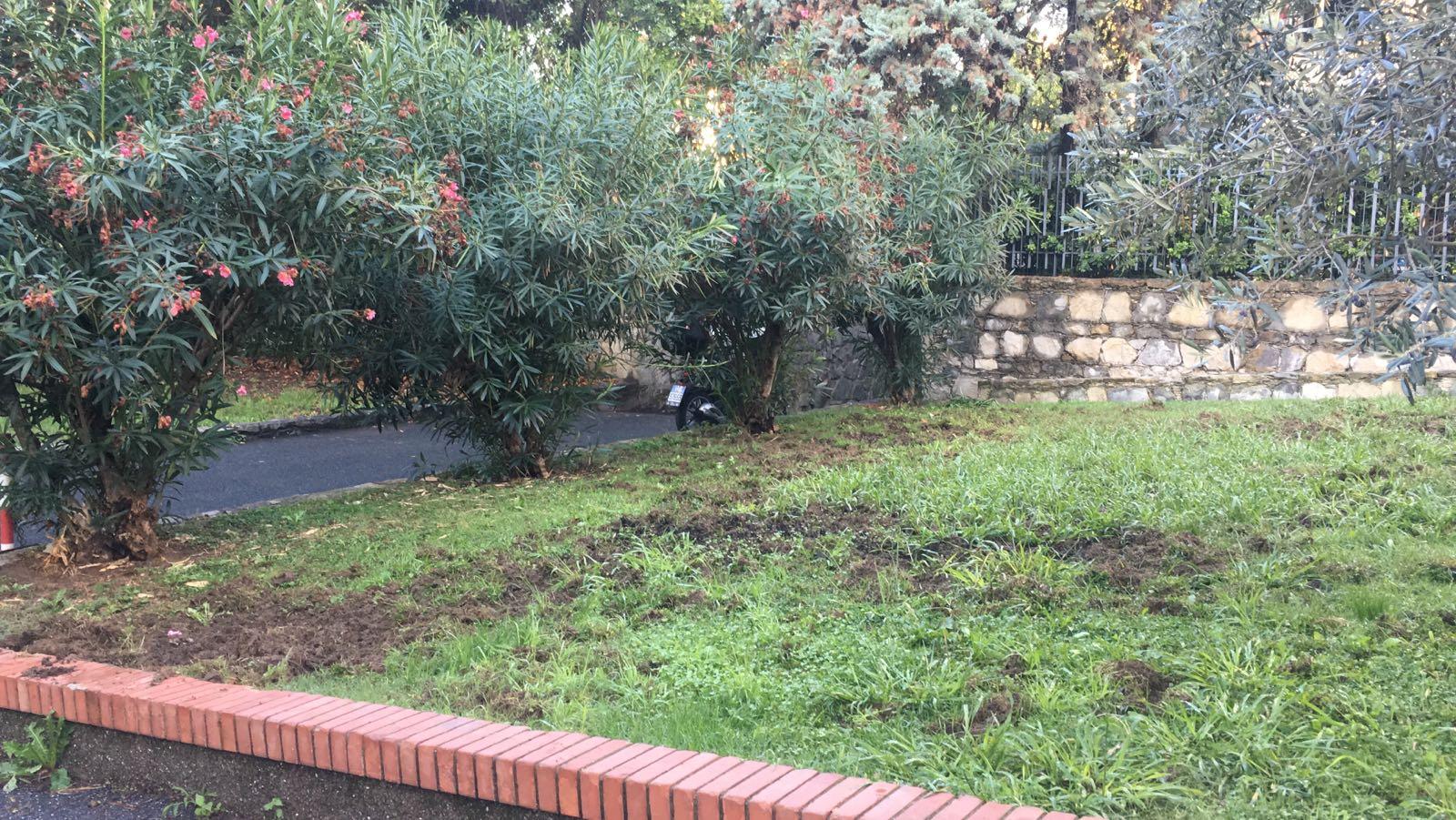 Cinghiali distruggono giardini ad albaro twebnews - Il giardino di albaro ...